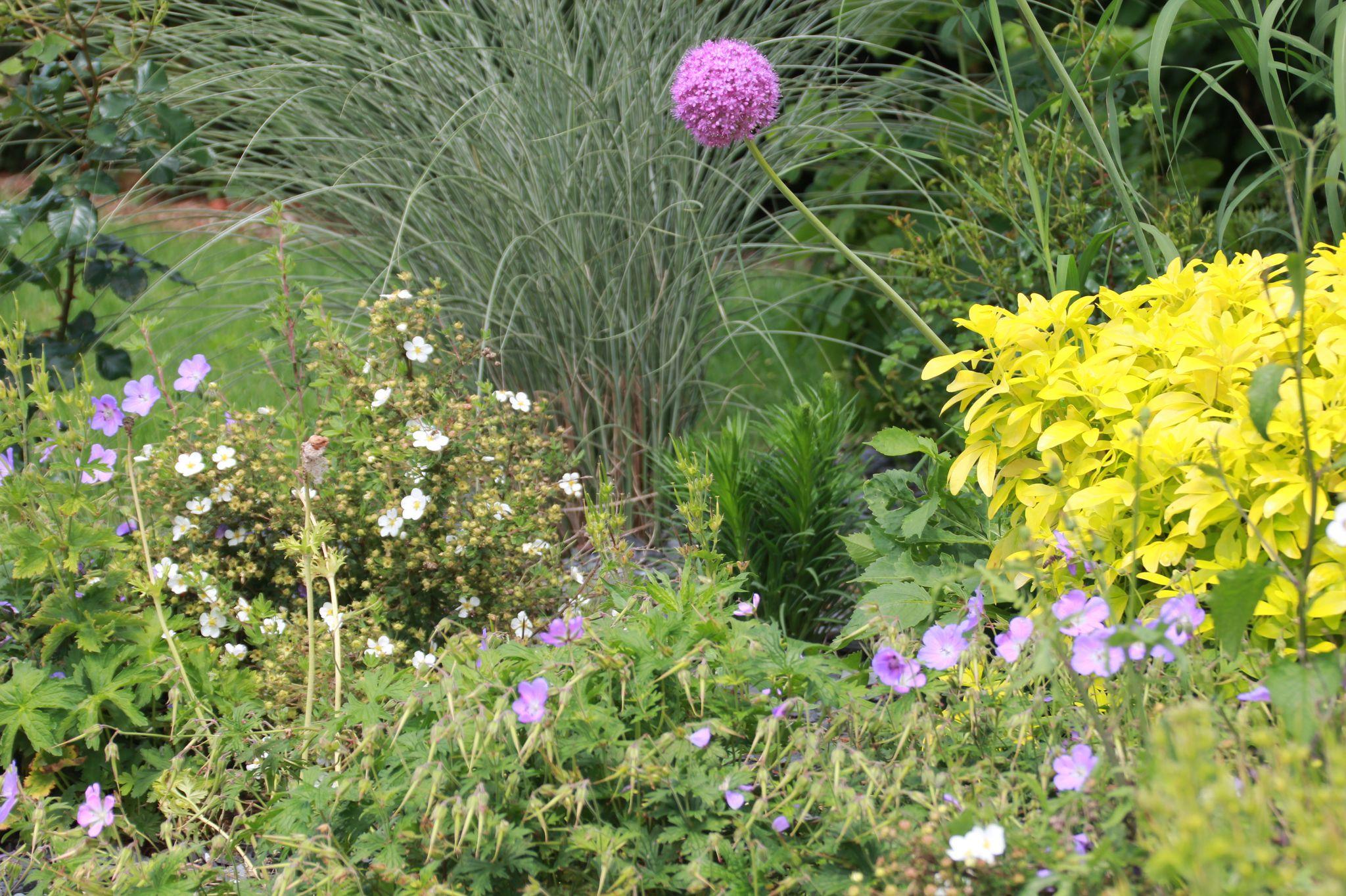 maillard paysage engazonnement gazon plaquage jardin extérieur la houssoye